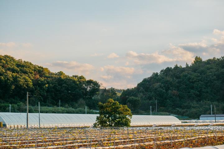 [크기변환]김하동포도밭.jpg