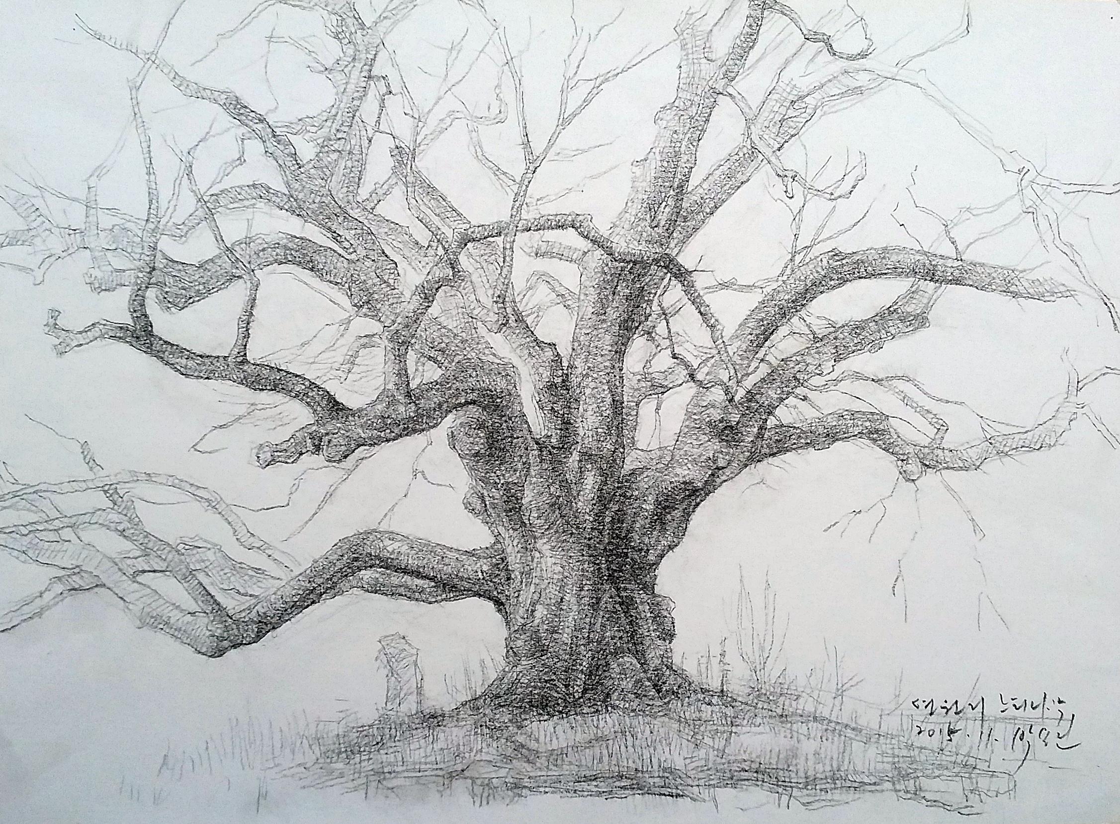 연원리 느티나무.jpg