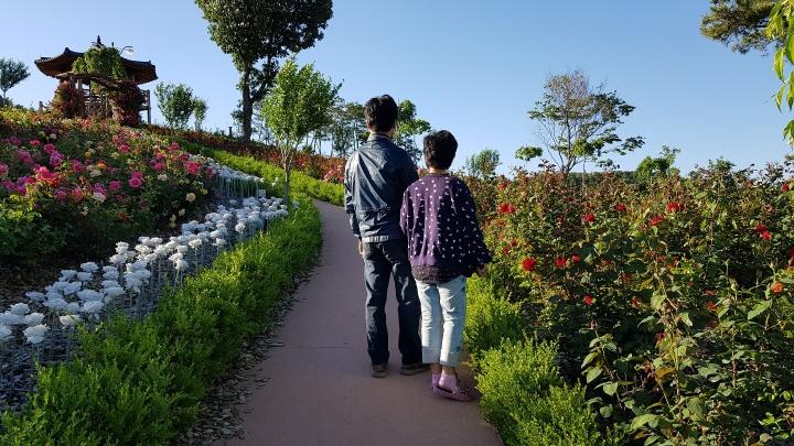 [크기변환]{농업정책과]함창명주테마공원 100만송이 장미 활짝 꽃 피우다.jpg
